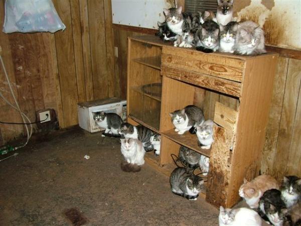 slide_cats