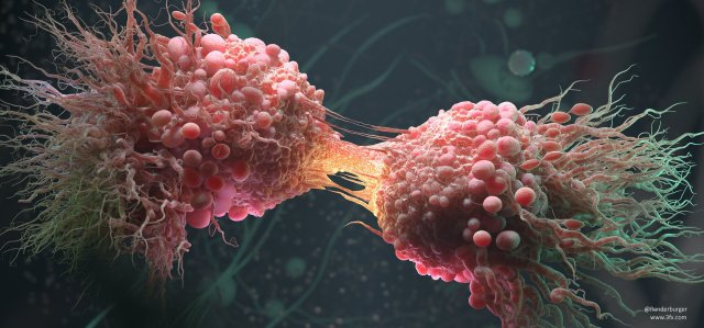связь клеток